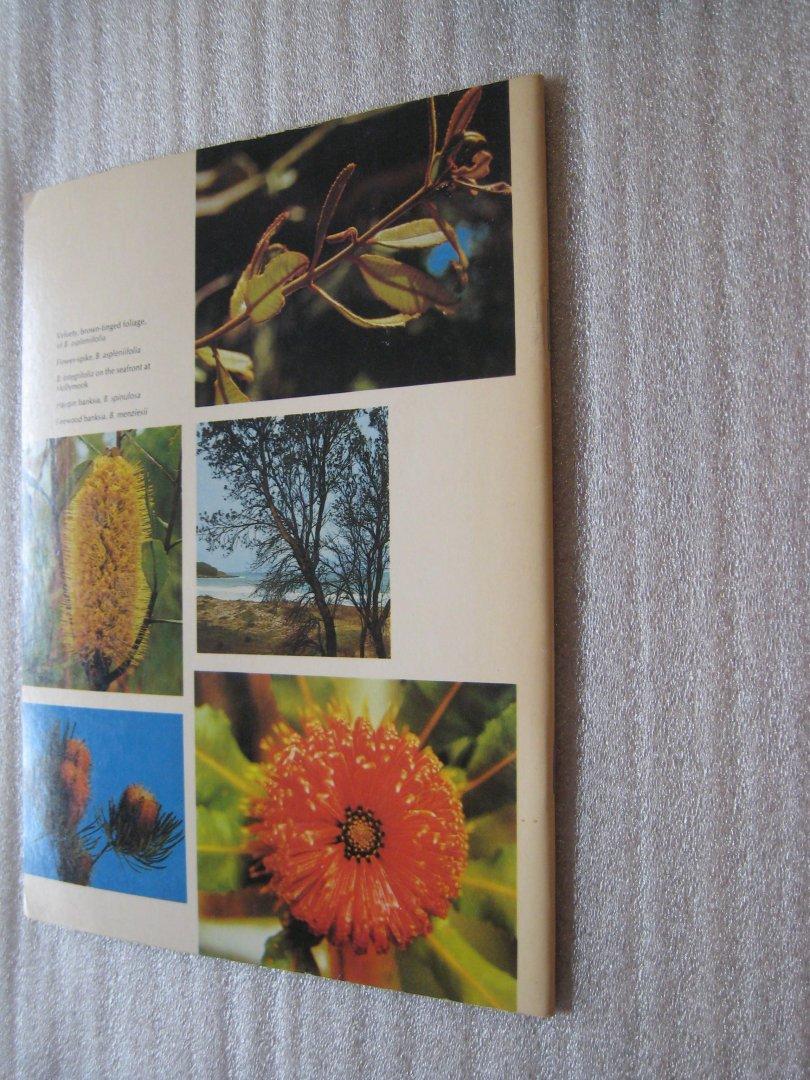 Barbara Mullins / Douglass Baglin - Australian Banksias