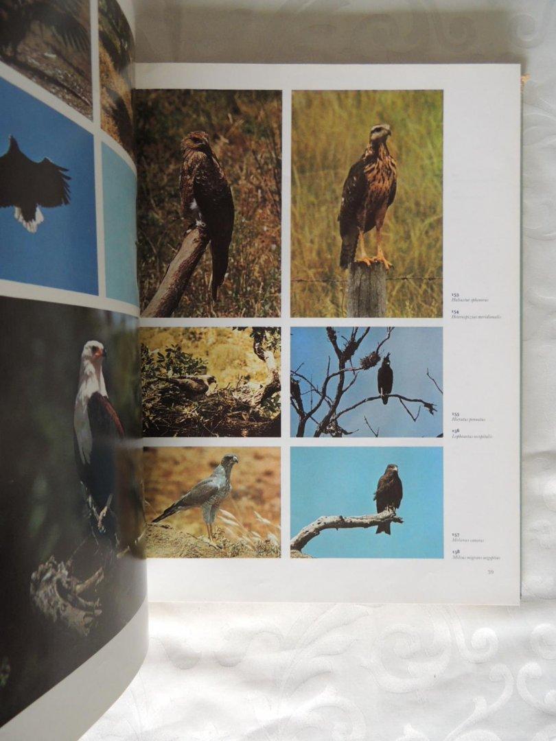 ... Bruce Campbell - 1000 vogels in kleur - Gefotografeerd in hun  natuurlijke omgeving ...