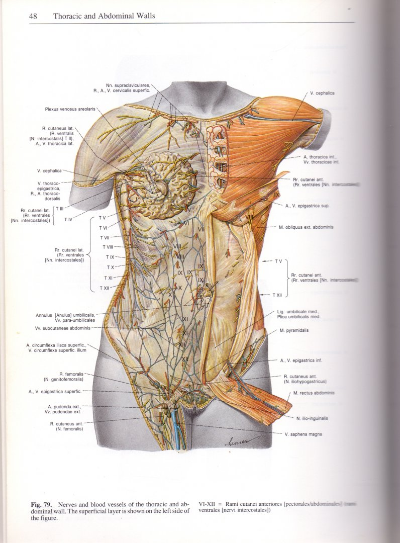 Boekwinkeltjes.nl - Sobotta. Atlas of Human Anatomy. Vol.2,Thorax ...