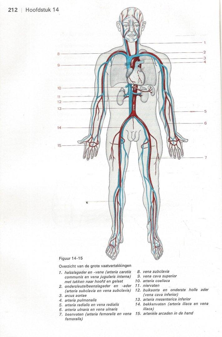 Salomé, Dr. A. J., Dr. A. Huson, Prof. P. J. Brouwer - IN GOEDE HANDEN, LEERGANG VOOR DE VERPLEEGKUNDE - FUNCTIONELE ANATOMIE