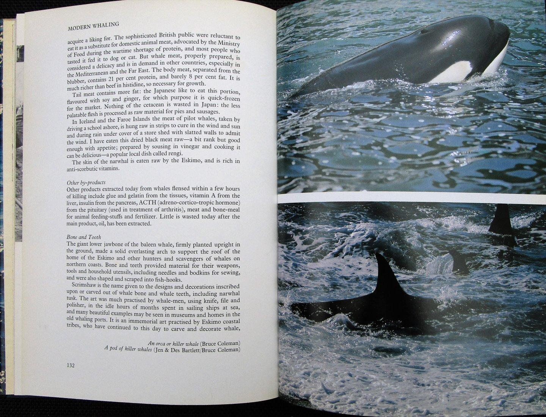 Lockley, Ronald - Whales, dolphines & porpoises (Engelstalig met veel foto`s)
