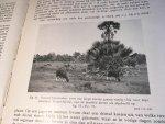 Hoogerwerf, A - Bantengs & Bezoek aan Meru Betiri Wildreservaat op Java