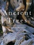 Anna Lewington - Ancient Trees