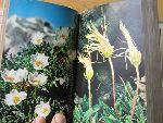 Kohlaut, Paula - Alpenbloemen in kleuren