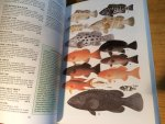 Allen, Gerry - Marine Fishes of Tropical Australia and South-East Asia