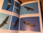 Wheeler, BK & WS Clark - A Photographic Guide to North American Raptors