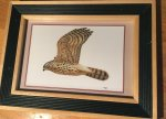 Glimmerveen, Ulco - kunstenaar - Havik - originele, gesigneerde aquarel van juveniel in vlucht