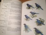 Madge, Steve & Hilary Burn - Crows and Jays - A Guide to the Crows, Jays and Magpies of the World