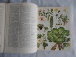 Morley, Dr. B.D. (ill. Barbara Everard) - Wilde bloemen van de wereld. Met meer dan 1000 afbeeldingen in kleuren door Babara Everard