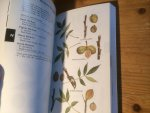 Petrides, George A - Eastern Trees - Peterson Field Guides no 11