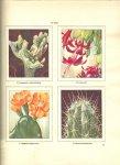 Laren. A.J. van  met Illustraties van C. en H. Rol, J, Voerman Jr - Cactussen