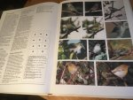 Mitchell & Young - Rare Birds of Britain and Europe - photographic handbook