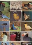 Coomber, Richard .. Dit rijk geillustreerde boek is bedoeld voor iedereen die van vogels houdt - Vogels rebo foto-encyclopedie   .. Meer dan 400 kleurenfotos en het beschrijft 180 vogelfamilies .. een boek om in te grasduinen