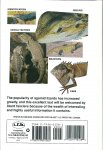 Manthey, Ulrich & Schuster, Norbert - AGAMID LIZARDS - Completely Illustrated with Color Photos, Showing Indentification, Care and Breeding -, Als Nieuw!