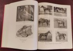Lady Wentworth - Thoroughbred racing stock and its ancestors, The authentic origin of pure blood