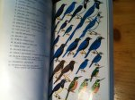 Davis, L Irby - A field guide to the birds of Mexico and Central America