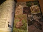 Delin & Svensson - Thieme Vogelatlas van de Europese Vogels met meer dan 1300 kleurenfoto's