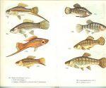 Postma Dr.W. & Jos Rutting met 190 Illustraties  van N. Norvil - Aquariumvissen in kleuren