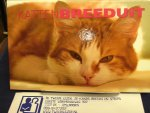 Beemsterboer, Peter - Katten Breeduit