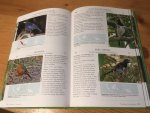 Strange, Morten - A Photographic Guide to the Birds of Indonesia - Second Edition