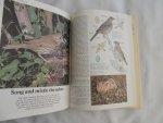 FLEGG,JIM - Theresa Brendell - BIRDS OF THE BRITISH ISLES - Shire Natural History Series