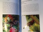 Denny, Jim - A photographic Guide to the Birds of Hawai'i - the main islands and offshore waters