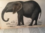 Goldsmith, Oliver - A History of the Earth and Animated Nature