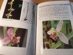 Sundermann, Hans - Europäische und mediterrane Orchideen - Eine Bestimmungsflora