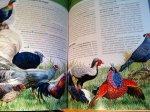 Schrijver - Vogel van de Wereld (in het Russisch)