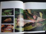 Mackinnon, John - Borneo, De wereld der woeste natuur