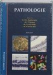 P. Hoedemaeker - Pathologie