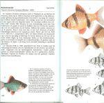 Petrovicky, Ivan en Ladislav  Pros .. Omslagontwerp Ton Wienbelt - Aquariumvissen. Een beschrijving van meer dan 100 soorten aquariumvissen, met vele illustraties in kleur een reis door de Natuur