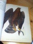 Guirao, Don Angel - Catalogo Metodico de las Aves observadas en une grand Parte de la Provincia de Murcia