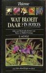Aichele, D. - Wat bloeit daar? In foto's. Gids van bloeiende planten van west- en Midden-Europa. Met 900 afbeeldingen in kleur