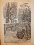 antique print (prent) - (Hunting). Kalkoenenjacht in Virginia.