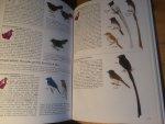 Myers, Susan - A field guide to the Birds of Borneo (Sabah, Sarawak, Brunei and Kalimantan)