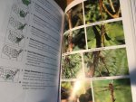 Dunkle, SW - A Field Guide to Dragonflies of North America - Dragonflies through Binoculars