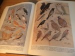 Goodman, Steven M & Meininger, Peter L - The Birds of Egypt