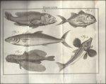Linnaeus - Natuurlyke historie of uitvoerige beschryving der dieren, planten en mineraalen. Eerste deel, agtste stuk. Vervolg der Visschen.  Linnaeus