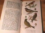 Hermann, Rudolf - Vögel und Vogelstimmen