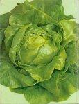 Buishand Tjerk   (ds1273) - Groentetuin voor iedereen