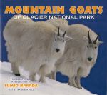 Yale, Kathleen - Mountain Goats of Glacier National Park. (photography and introduction by Sumio Harada)
