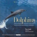 Onbekend - DOLPHINS