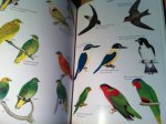 Watling, Dick - Birds of Fiji, Tonga and Samoa