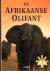 Hall-Martin - Afrikaanse olifant