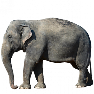 Logo d'olifant