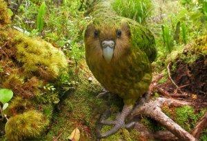 Logo Kakapo Books