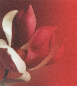 Logo De boekenzolder